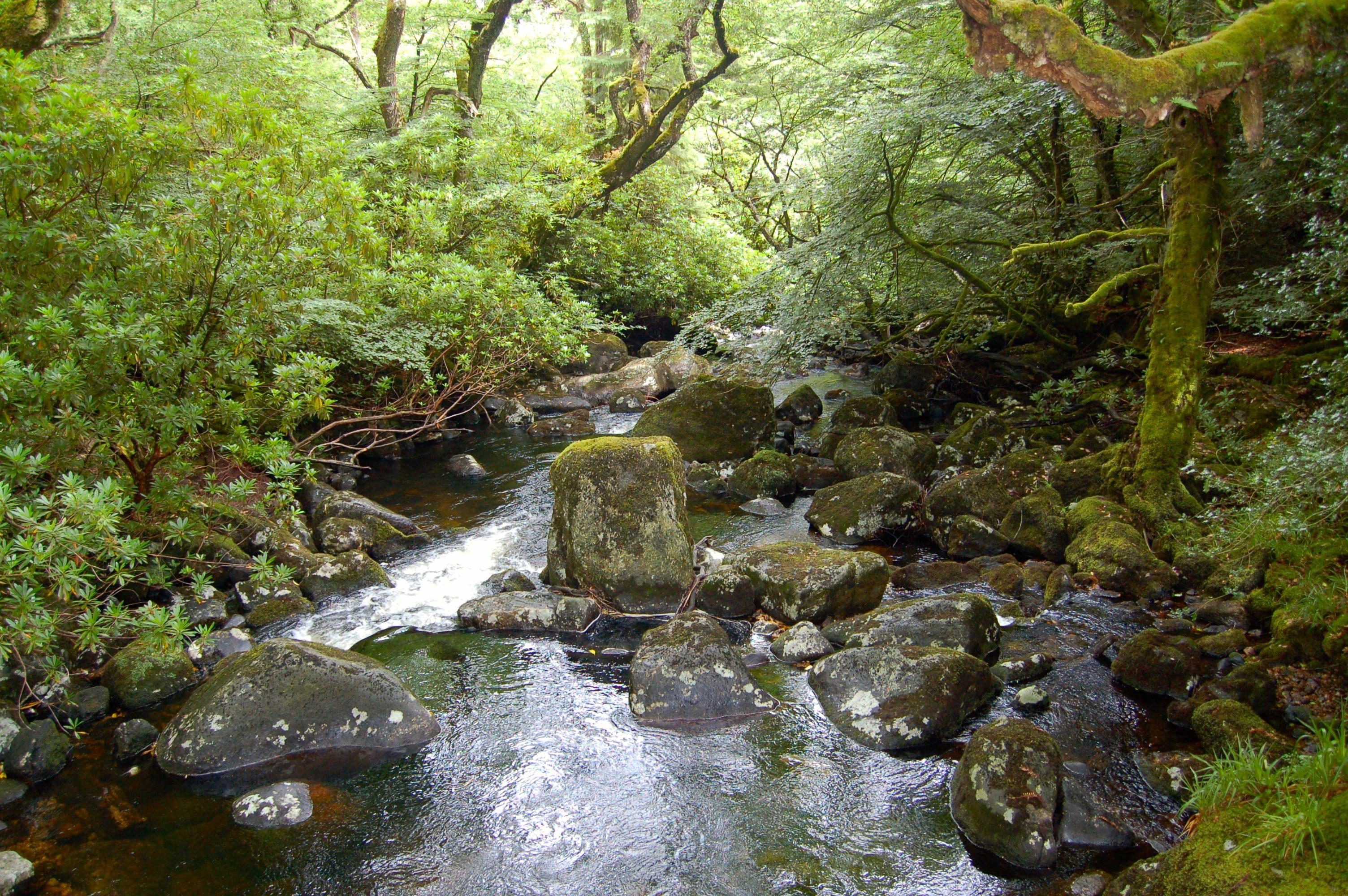 Dartmoore Wald