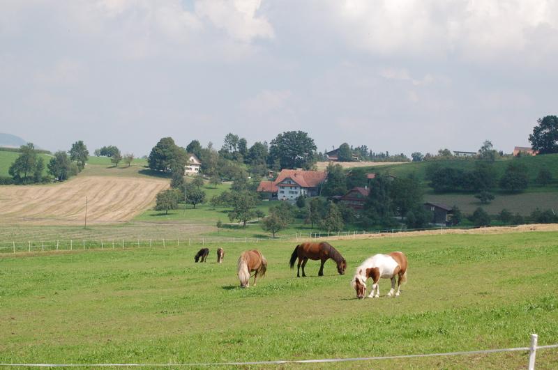 Wahl des richtigen Ponys